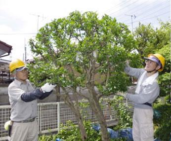 庭木剪定サービス